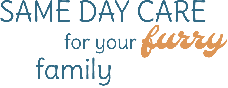 Same day care for your furry friend
